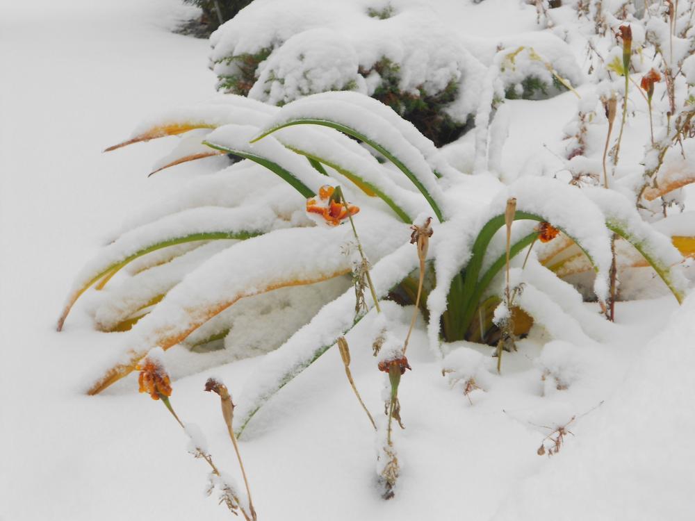 Радуга на снегу