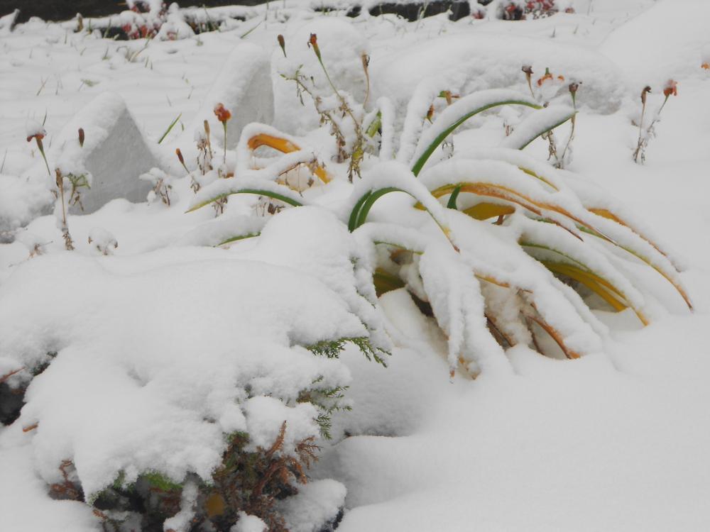 радуга на снегу 17.10.2014