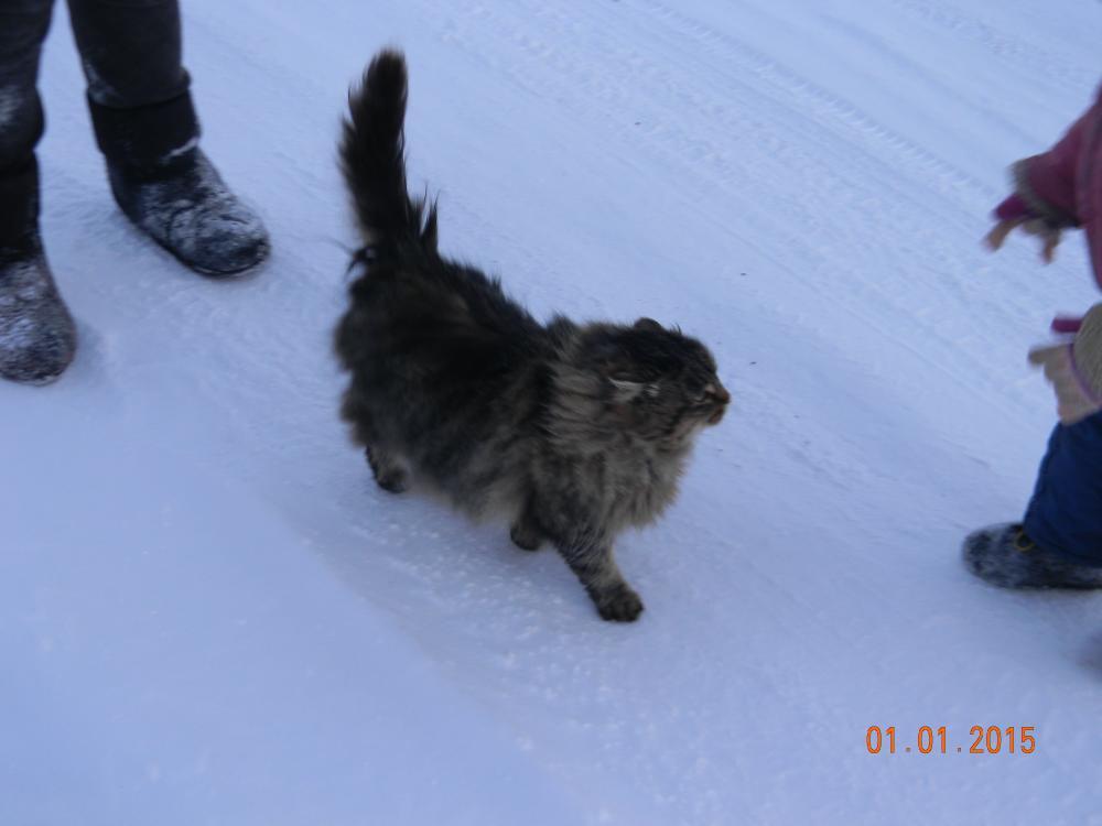поймали мы кота ! автор Ольга Рожнова