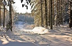 В Коркинском районе проверят леса