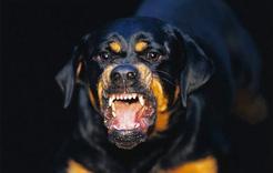 В Коркино обезвредили агрессивную собаку