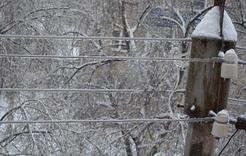 От ледяного дождя досталось и Коркинскому району