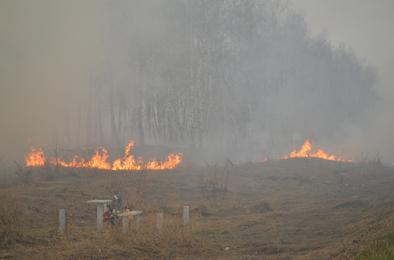 Пожары: чаще всего горит Роза
