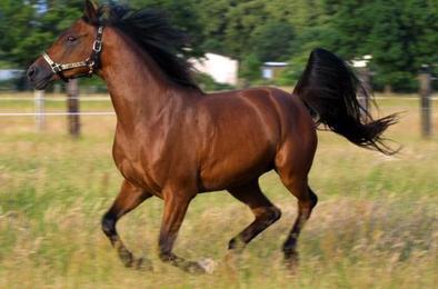 Трагическая случайность унесла жизнь коневода