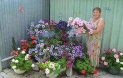 В Коркино выявляют лучших цветоводов