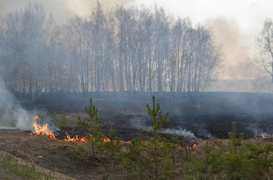 В Коркинском районе горят гектары сухой травы