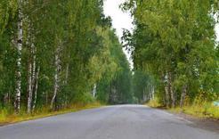 В Коркино двух подростков вывели из леса по телефону