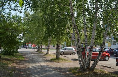 В Коркино существует аллея, посаженная танкистами-добровольцами