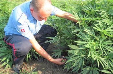Полиция Коркино проводит операцию «Мак»