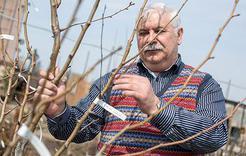 В Коркинском районе садоводов поддержат деньгами