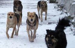 В Коркинском районе отловлено свыше 400 бездомных животных
