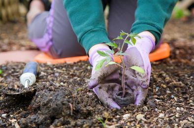 Дачников Коркино научат тонкостям садоводства