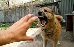 Коркинцы страдают от укусов животными