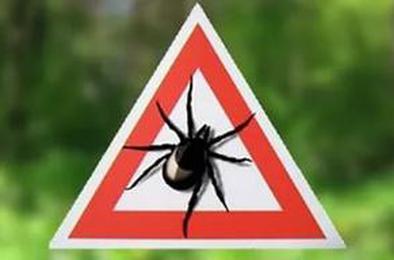 В Коркинском районе уже около 60 укушенных клещами