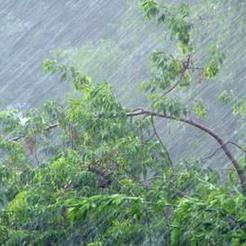 МЧС предупреждает южноуральцев о шквалистом ветре