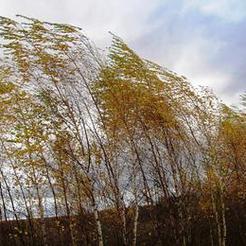 В Челябинской области обещают сильный ветер и грозы