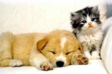 В России владельцев кошек и собак обяжут пройти регистрацию