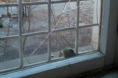 В Коркино хулиганы ночью разбили окна в управляющей организации