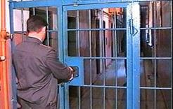 В Коркино задержан подозреваемый в разбойном нападении на магазин