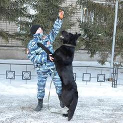 Грей любит девушек: коркинский служебный пёс подчиняется только  дамам