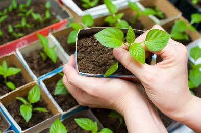 Коркинцам расскажут о новых технологиях в садоводстве