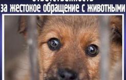 За жестокое обращение с животными накажут строже