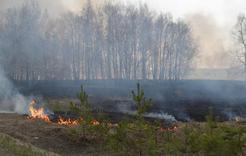 В Коркино готовятся к весенне-летнему пожароопасному периоду