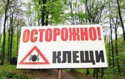 В Челябинской области в предстоящий сезон клещи будут активнее