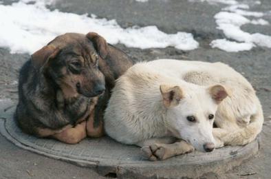 В Коркинском районе продолжается отлов бездомных животных