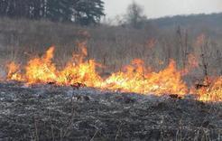 Жителей Коркино за сжигание травы и мусора накажут штрафом