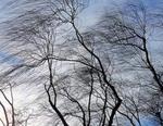МЧС предупреждает южноуральцев об усилении ветра