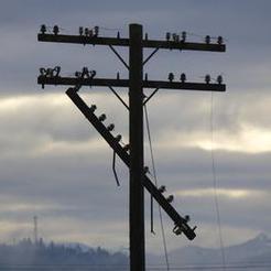 Шквалистый ветер оставил в Коркино без электроснабжения сотни домов