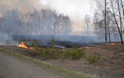 В Коркинском районе  горят трава и камыш на больших площадях