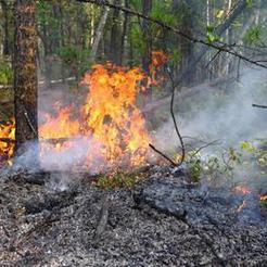 Завтра МЧС прогнозирует сильный ветер и осложнение лесопожарной обстановки