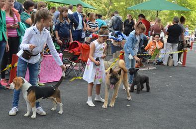 В Коркино пройдёт региональная выставка собак