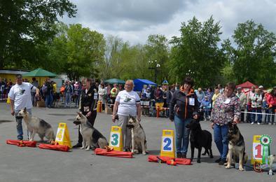 В Коркино состоялась региональная выставка собак