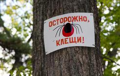 В Коркинском районе клещи покусали почти 150 человек