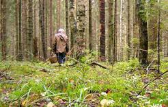 В Коркинском районе искали заблудившуюся бабушку