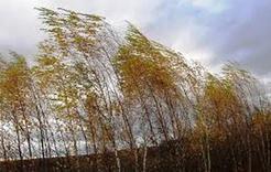На Южном Урале прогнозируется сильный ветер