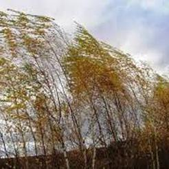 Сегодня на Южном Урале ожидается сильный ветер