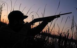 Ужесточено наказание за незаконную охоту
