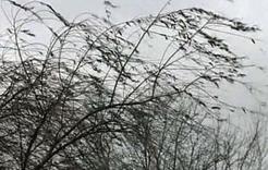 В регионе объявлено штормовое предупреждение
