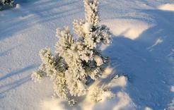 Аномальные морозы до 40 градусов прогнозируются на Южном Урале