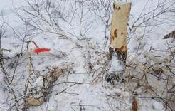 Эксперты ОНФ обратились в прокуратуру Челябинской области по факту вырубки зеленых насаждений в охранной зоне