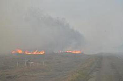В Коркино произошло два пожара, каждый день горит трава
