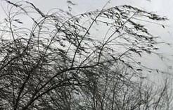 Сегодня на Южном Урале снова будет ветрено