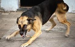 В Коркино больная бешенством собака укусила девушку