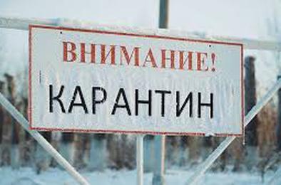 В Коркинском районе введен карантин по бешенству