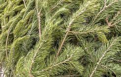Где в Коркино можно будет купить елку