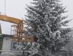 Жители Коркино подарили елку для главной площади города